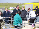 Sheep judging with judge Donald MacCorquodale, Appin (centre)